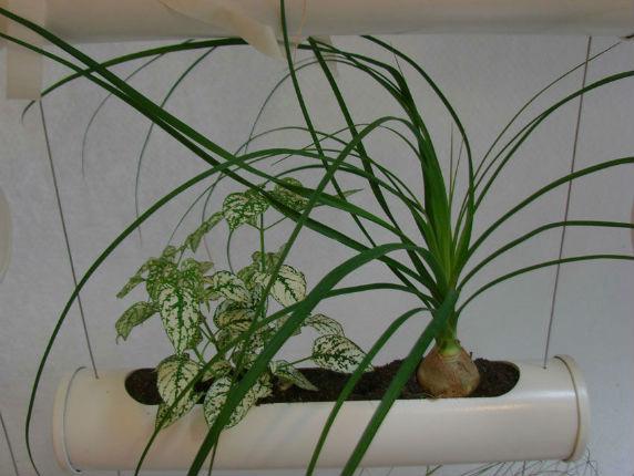 Quel terreau pour cannabis exterieur 28 images la for Quelles plantes pour mur vegetal exterieur